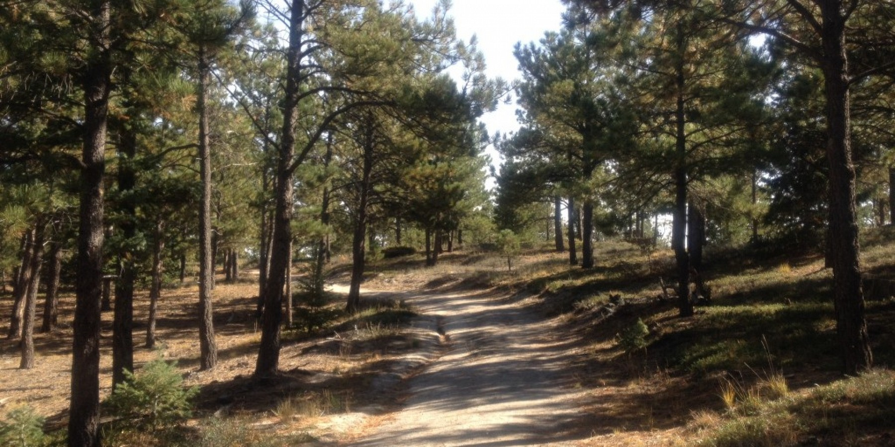14271 Timber Trail, Larkspur, CO 80118